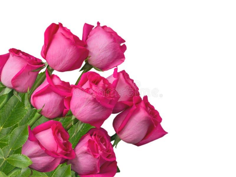 Розовый пук роз изолированный на белизне стоковые фото