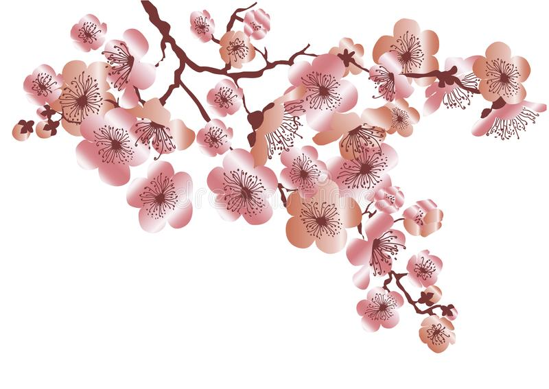 Розовый пук цветения Сакуры цвета золота бесплатная иллюстрация