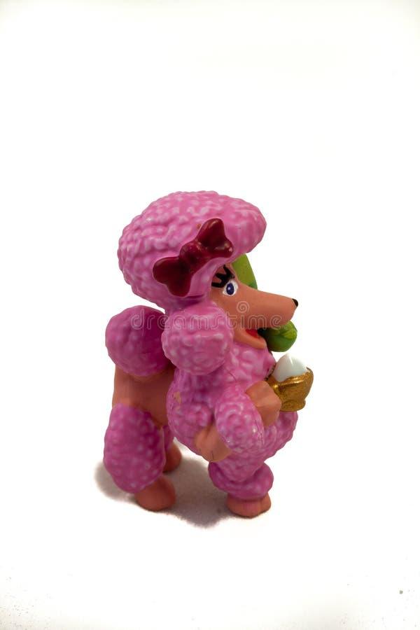 Розовый пудель на белизне стоковая фотография rf