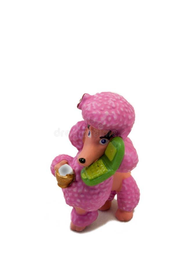 Розовый пудель на белизне стоковое фото