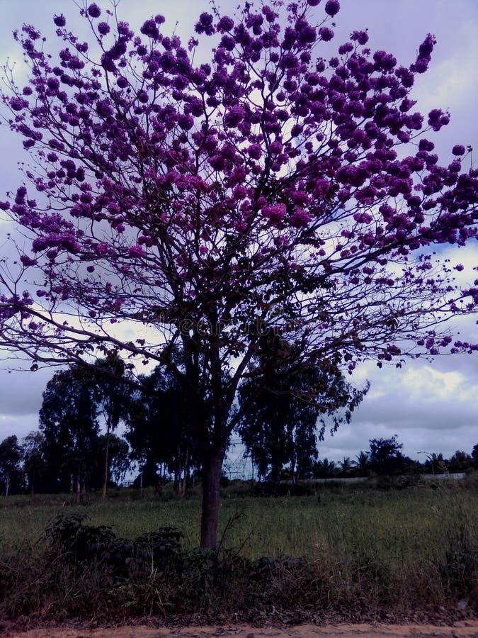 Розовый рай стоковая фотография rf