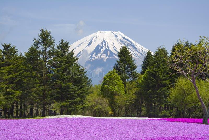 Розовый сад мха с Mount Fuji стоковое изображение rf