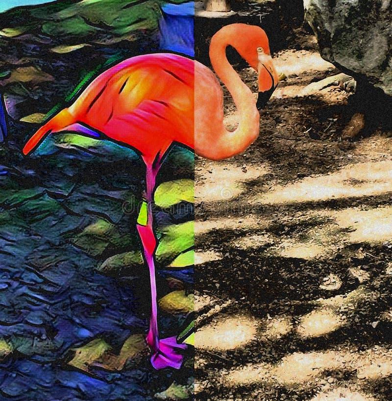 Розовый фламинго Преобразования цветов отображают иллюстрация вектора