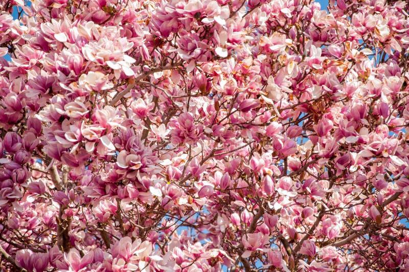 Розовый цветок весны стоковое фото rf