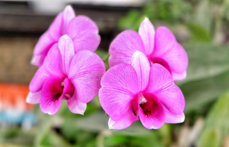 Розовый цветок 002 орхидеи стоковое изображение