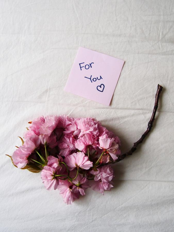 Розовый цветок для вас стоковое фото