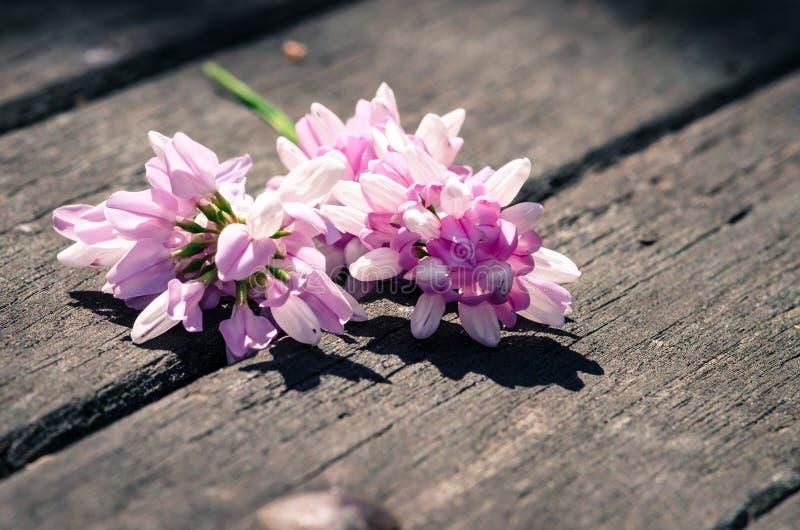 Download Розовый цветок стоковое изображение. изображение насчитывающей мати - 41662231