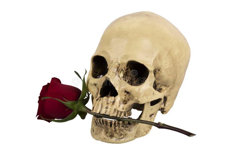 розовый череп стоковые фото
