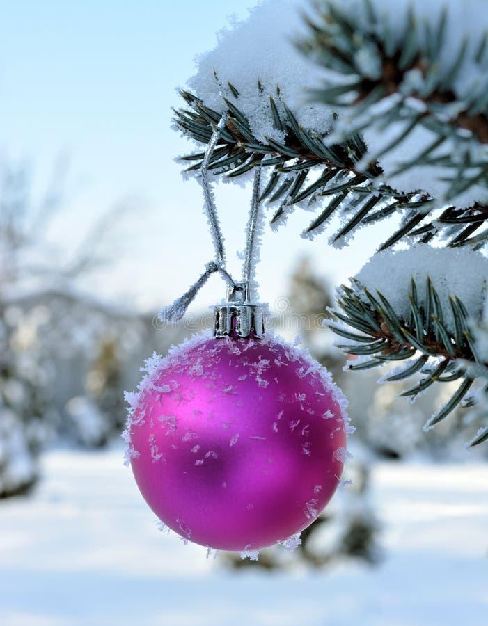 Розовый шарик Нового Года на ели в реальном маштабе времени с заморозком и снегом стоковое изображение