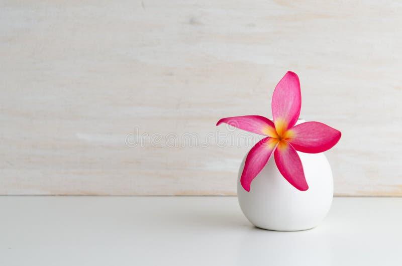 Розовый Frangipani в опарнике с деревянной предпосылкой стоковое фото rf