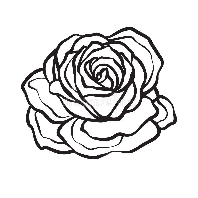 Розовым изолированная цветком нарисованная рука плана Illus вектора ассортимента запасов иллюстрация штока