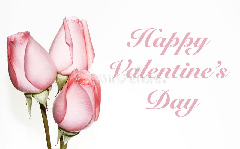 3 розовых розы на день валентинки стоковое изображение