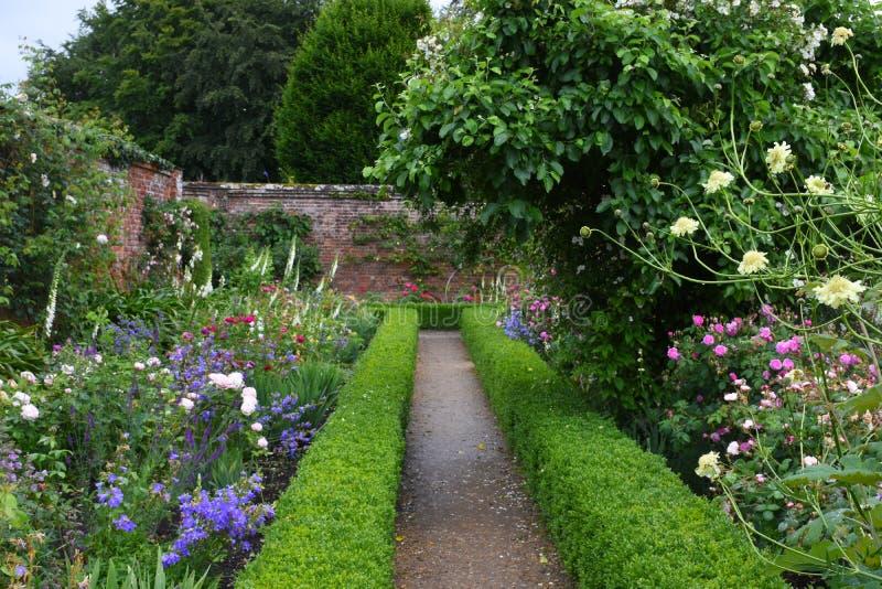 Розы, аббатство Mottisfont, Хемпшир, Англия стоковые фотографии rf