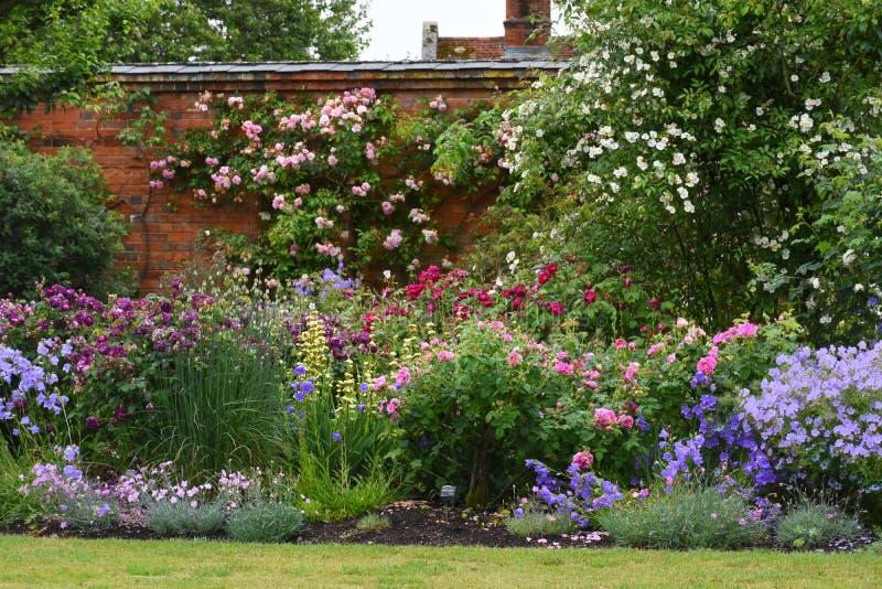 Розы, аббатство Mottisfont, Хемпшир, Англия стоковое фото