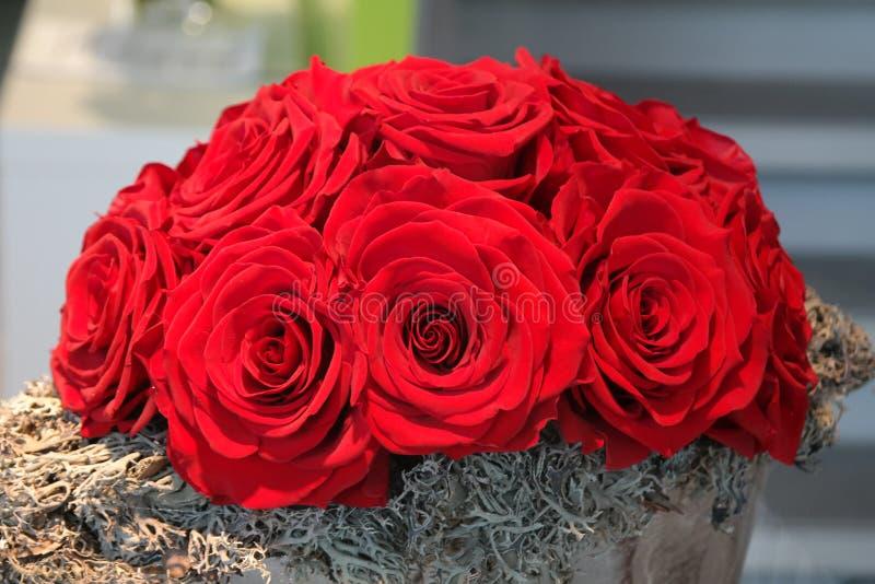 Розы бархата букета красные стоковые фотографии rf