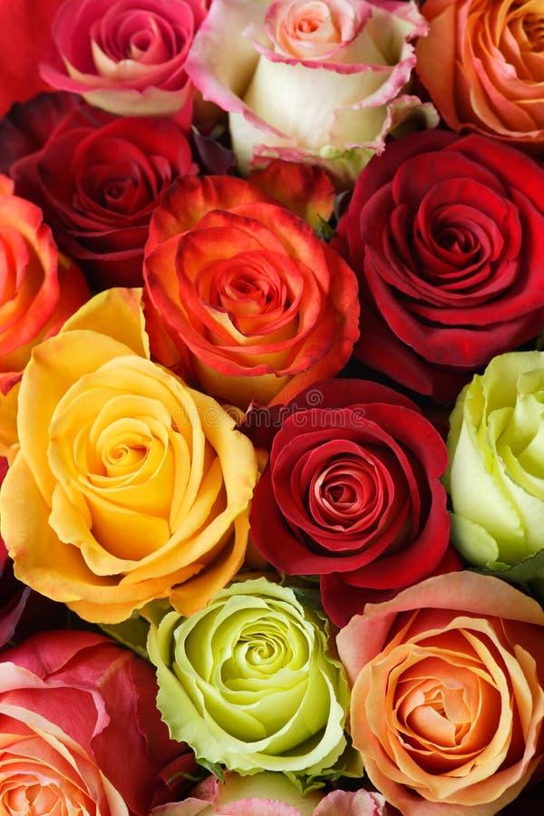 розы букета стоковые изображения