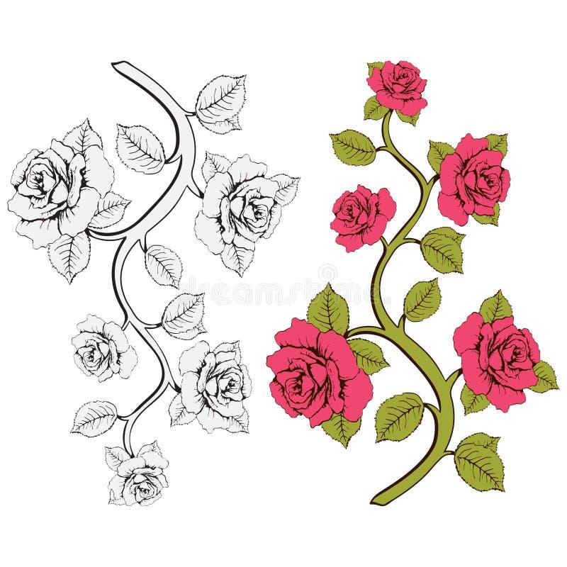 Розы ветви цветка Комплект розовых и белых ветвей Флористическая печать бесплатная иллюстрация
