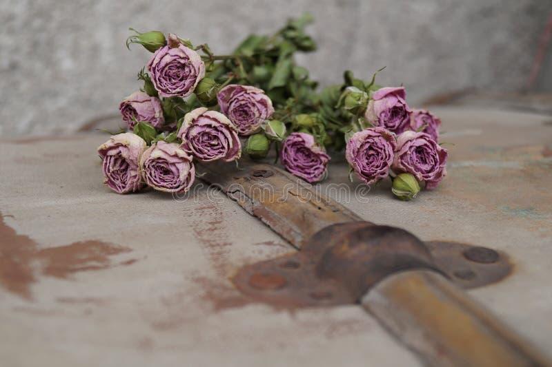 розы вянут стоковая фотография