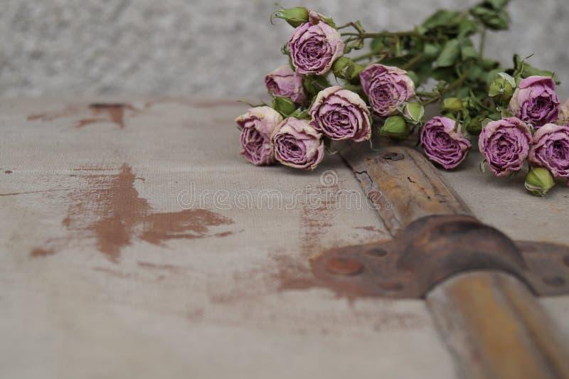 розы вянут стоковое фото rf