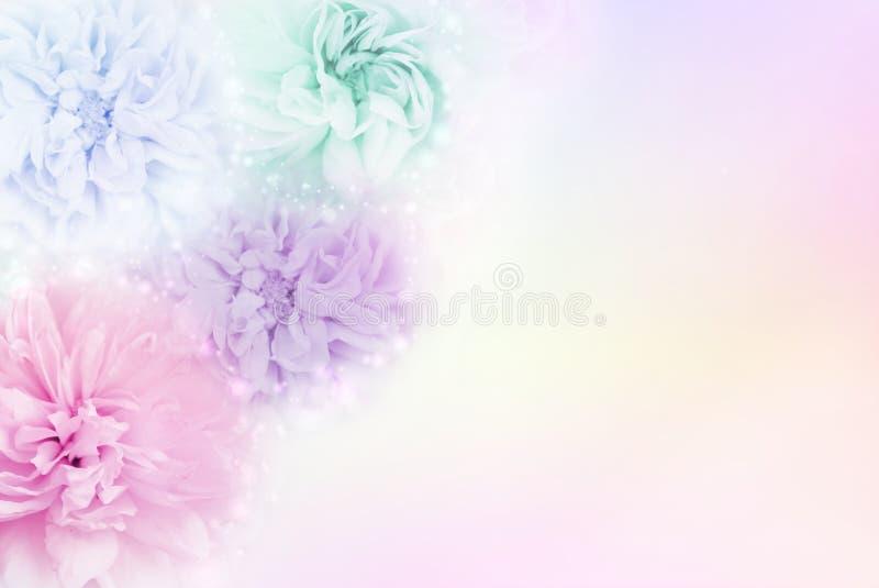 Розы в мягкой пастельной предпосылке, которая транспортирует концепции дня ` s валентинки влюбленности стоковые изображения rf