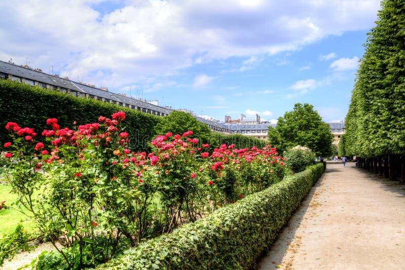 Розы в саде Palais Royal в центре Парижа, Франции стоковое фото
