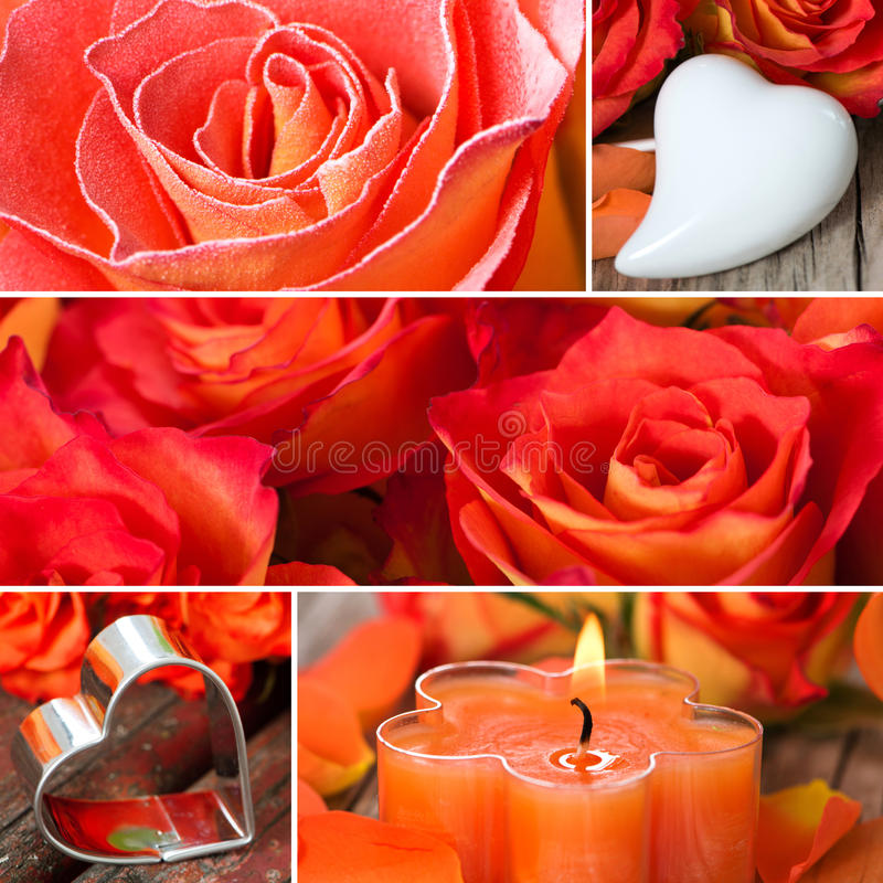 Розы и коллаж сердец стоковое изображение rf