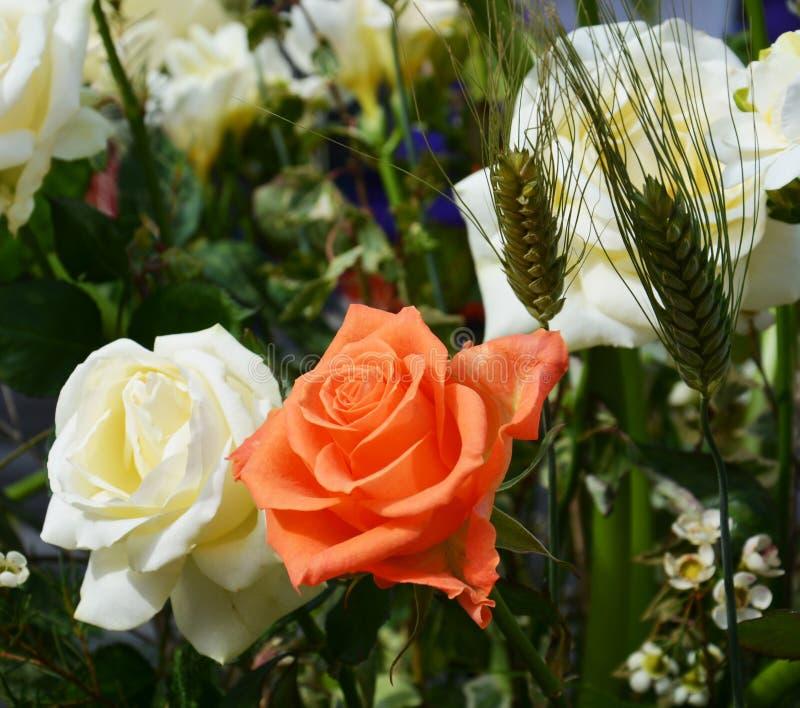 Розы и пшеница стоковые фотографии rf