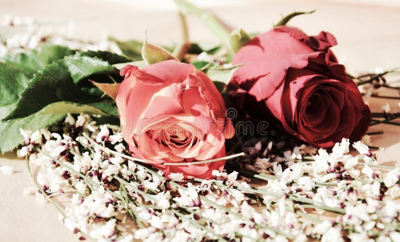 Розы как символы красоты стоковое изображение