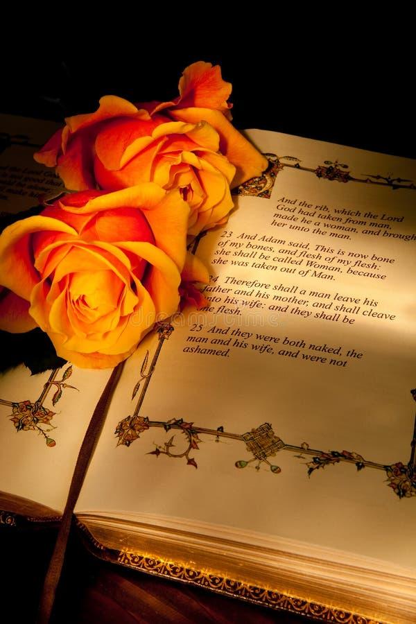 розы кануна стоковое изображение