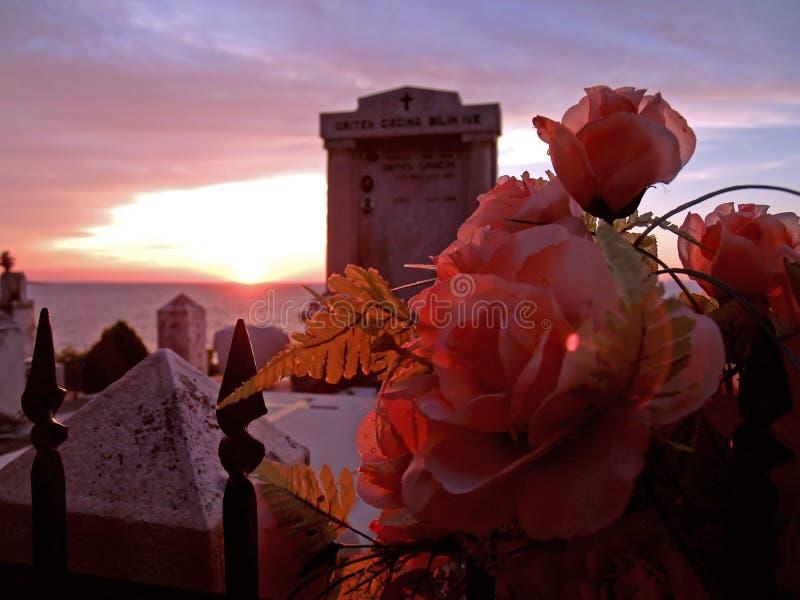 розы кладбища стоковая фотография
