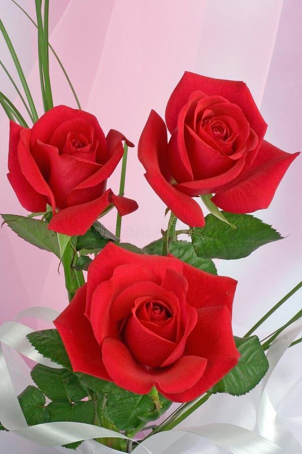 розы красного цвета состава стоковые изображения rf