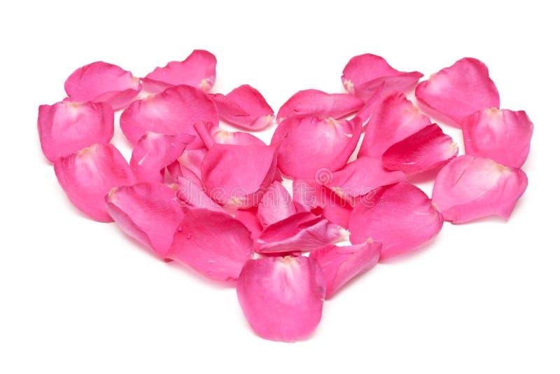 розы лепестка стоковые фотографии rf