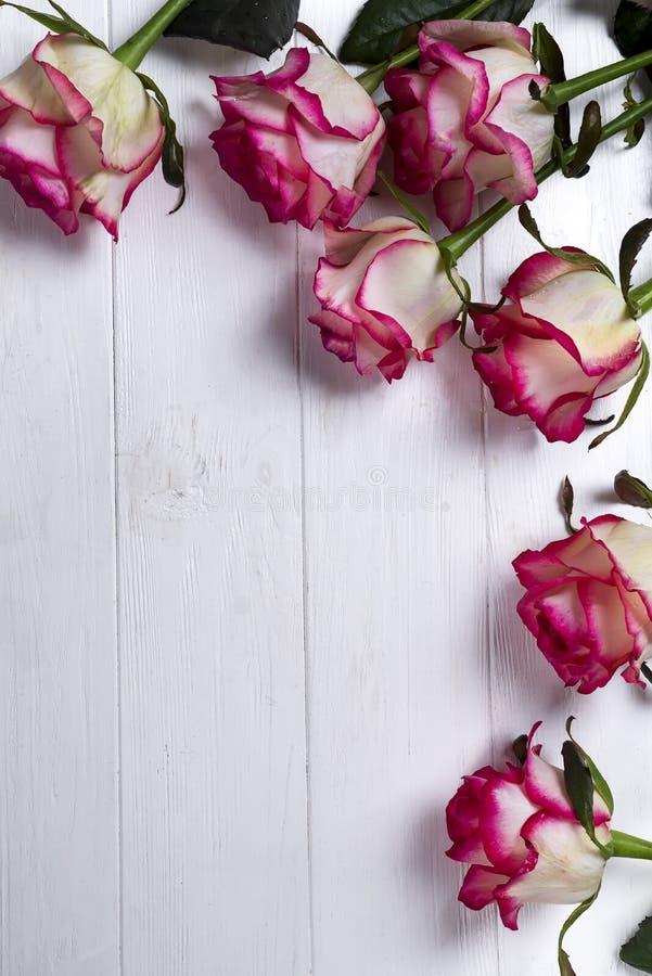Розы обрамляют на деревянной белой предпосылке стоковые изображения