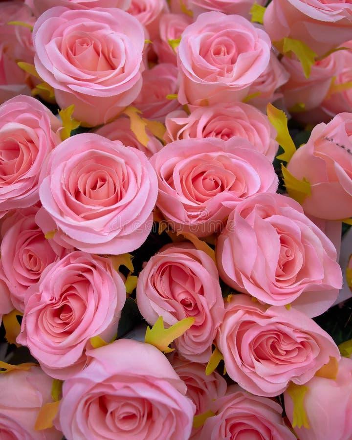 розы пука поддельные розовые стоковые изображения