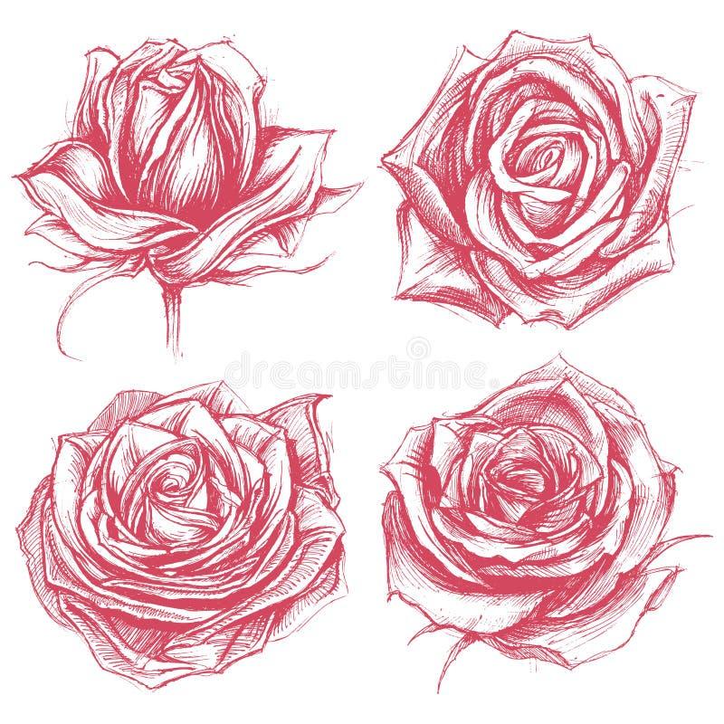 Розы рисуя комплект 002 иллюстрация вектора
