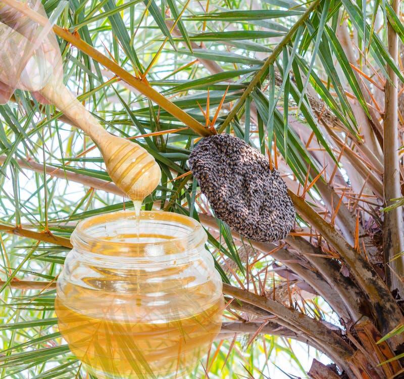 Рой крапивницы пчел меда стоковая фотография rf