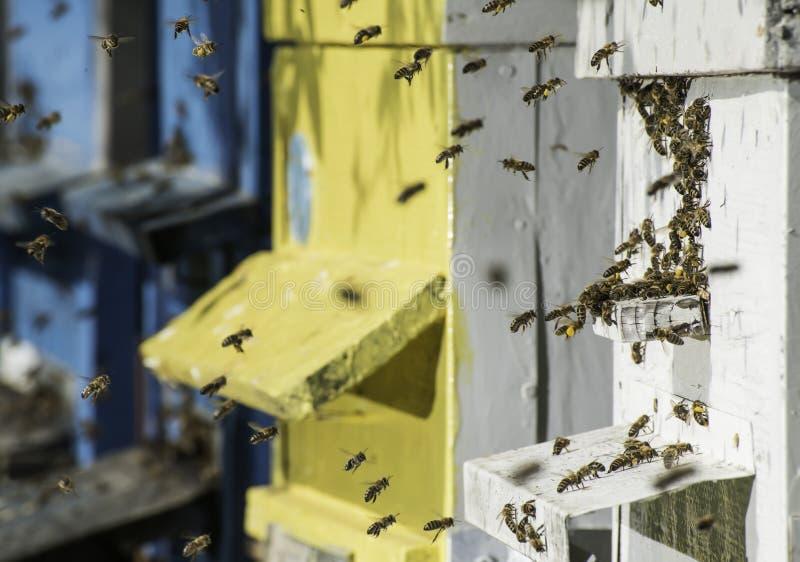 Рой пчел летает к улью стоковое фото rf