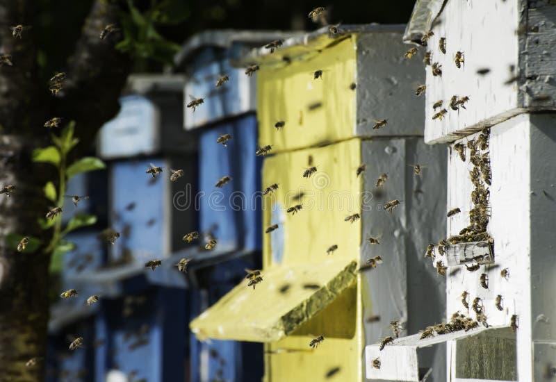Рой пчел летает к улью стоковая фотография rf