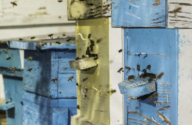 Рой пчел летает к улью стоковые изображения
