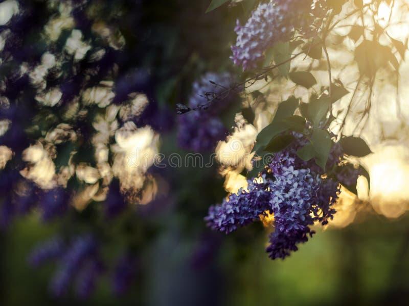 Романтичная мягкая и расплывчатая предпосылка природы лета стоковые изображения rf