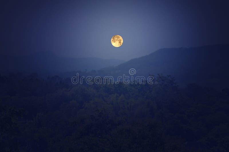 Романтичная ноча полнолуния стоковая фотография rf