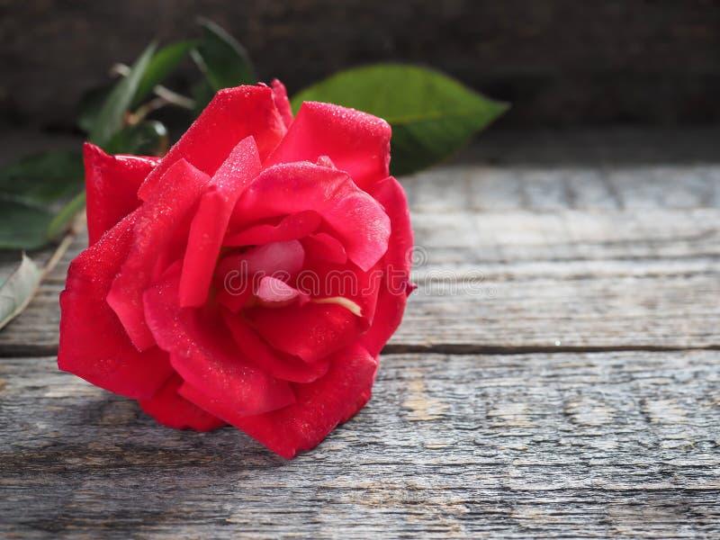 Романтичная предпосылка с красной розой на деревянной таблице стоковое фото rf