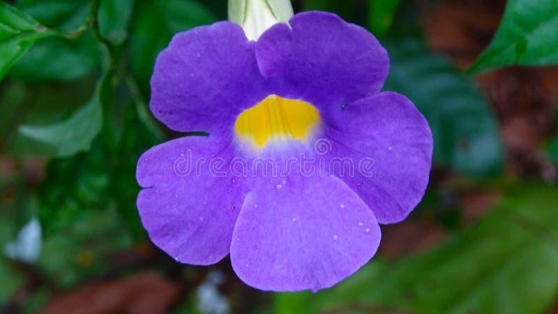 Романтичная пурпурная иллюстрация предпосылки цветков стоковые изображения