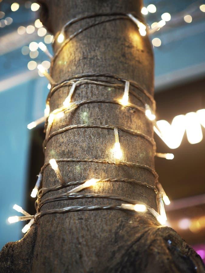 Романтичные абстрактные света Ditsy вокруг ствола дерева стоковое изображение rf
