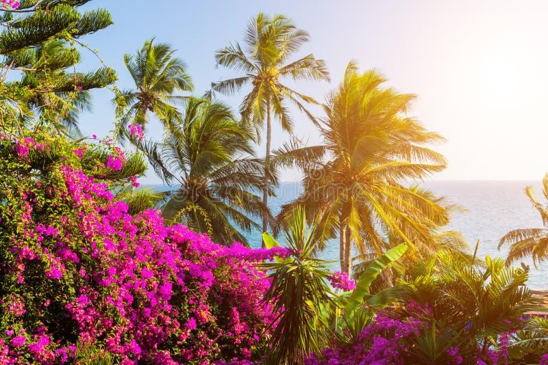 Романтичный заход солнца на тропическом пляже с пальмами стоковое фото