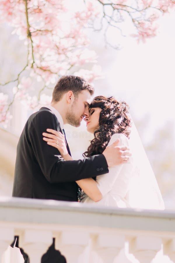 Романтичный момент очаровательных пар новобрачных на террасе в солнечном саде под blossoming ветвями дерева магнолии стоковые фотографии rf