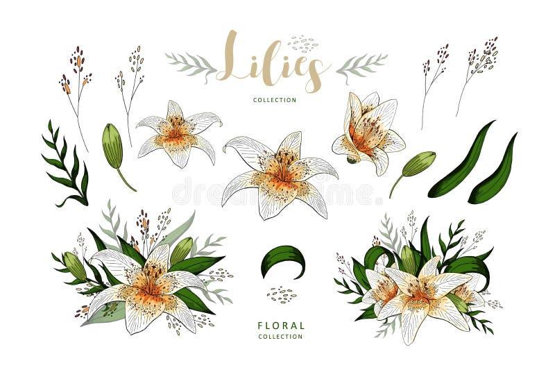 Романтичный набор элементов открытки цветков лилии изолированных на белизне бесплатная иллюстрация