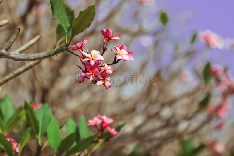 Романтичный розовый цветок стоковое изображение