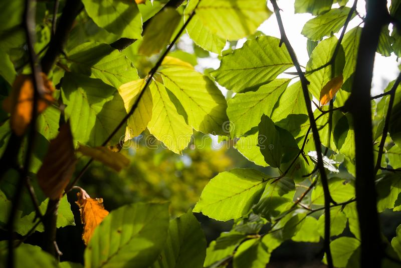 Романтичный солнечный свет на дереве выходит с цветами осени начала стоковое изображение rf