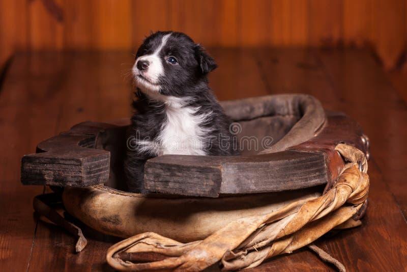 Романтичный щенок внутри воротника для лошади смотрит в расстояние стоковое фото